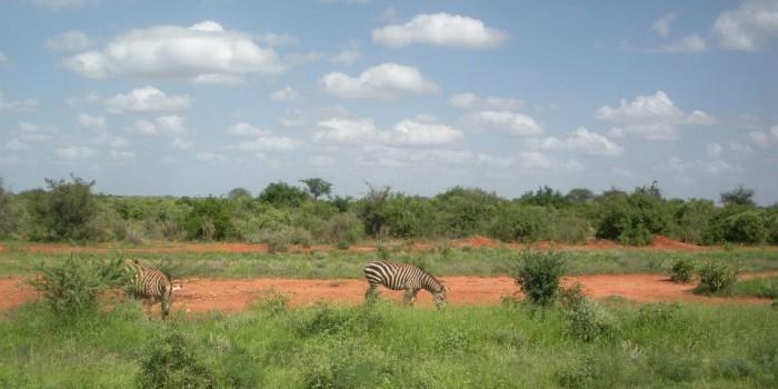 viaggio di nozze in kenia